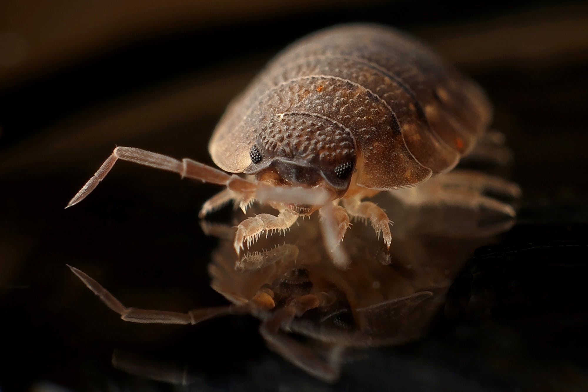 armadillo-worm-bug-insect.jpg?auto=compr