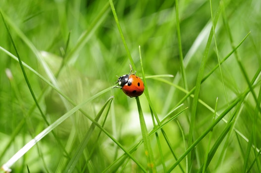 Free stock photo of nature, insect, ladybug, bug