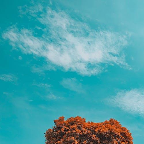 Free stock photo of autumn, autumn colors, beautiful sky