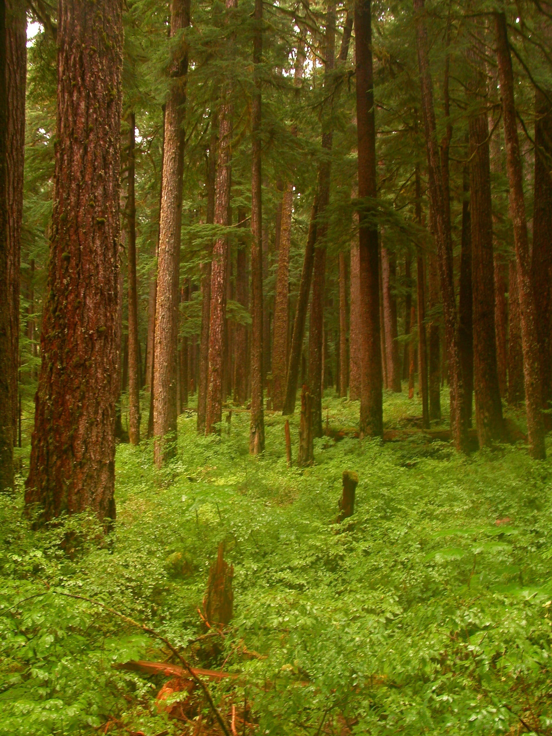 Free stock photo of nature, trees, usa, green