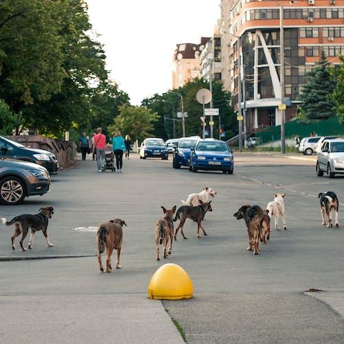 Immagine gratuita di animali, animali domestici, attendere, auto