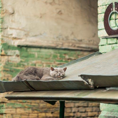 Gray Cat Lying on Gray Metal Board