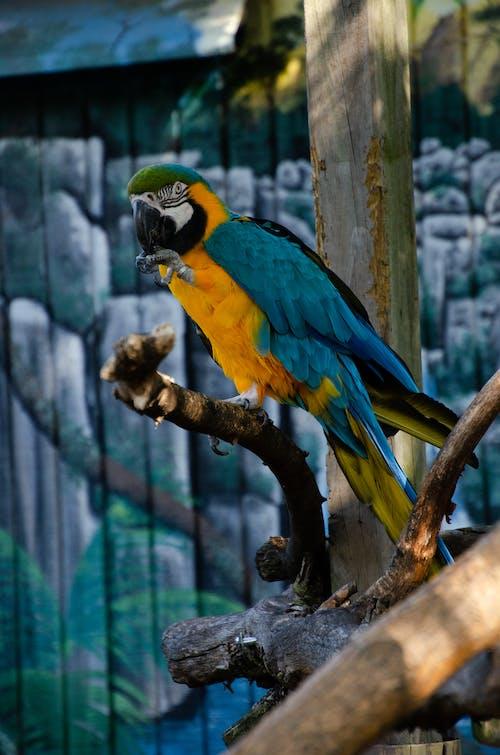 Základová fotografie zdarma na téma divoké zvíře, klasický, matka příroda