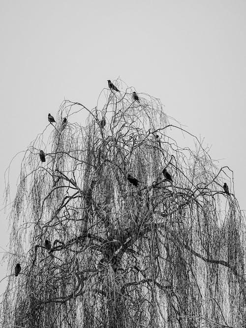 Foto profissional grátis de árvore, com frio, corvo