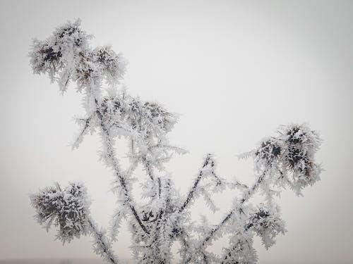 Foto profissional grátis de com frio, congelado, erva