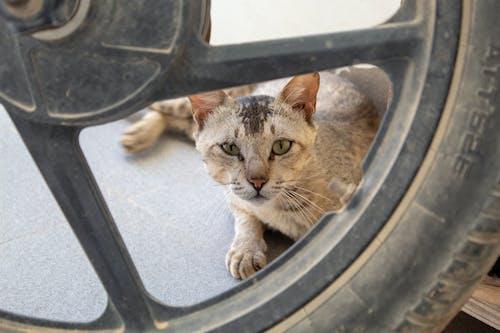 gözler, kedi, lastik içeren Ücretsiz stok fotoğraf