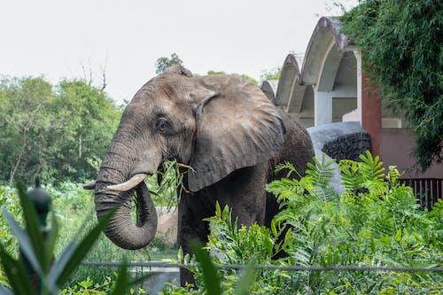 afrika fili, hayvanat bahçesi, jaipur içeren Ücretsiz stok fotoğraf
