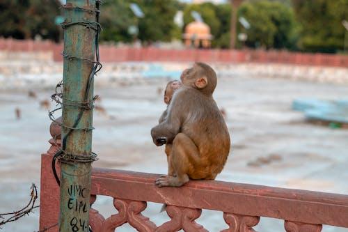 Allah, bebek, ilah içeren Ücretsiz stok fotoğraf