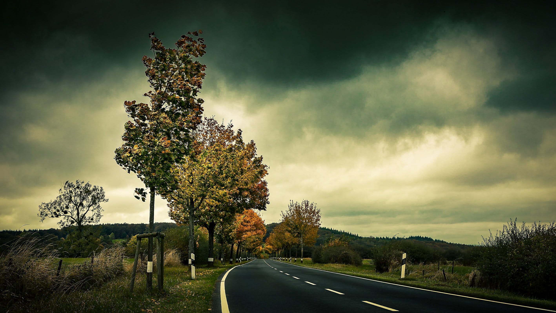 Empty Highway Beside Trees