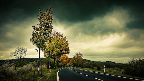 Immagine gratuita di alba, alberi, asfalto, carreggiata