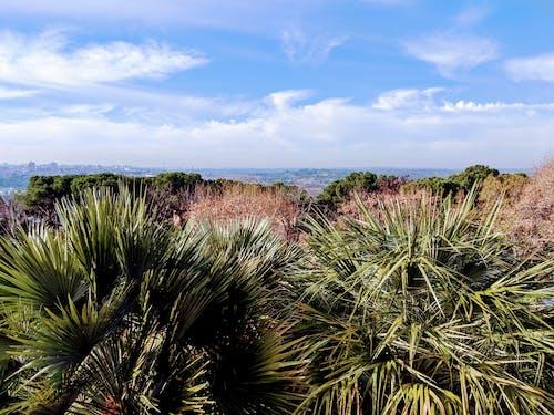 Free stock photo of landscape, madrid, nature, palm
