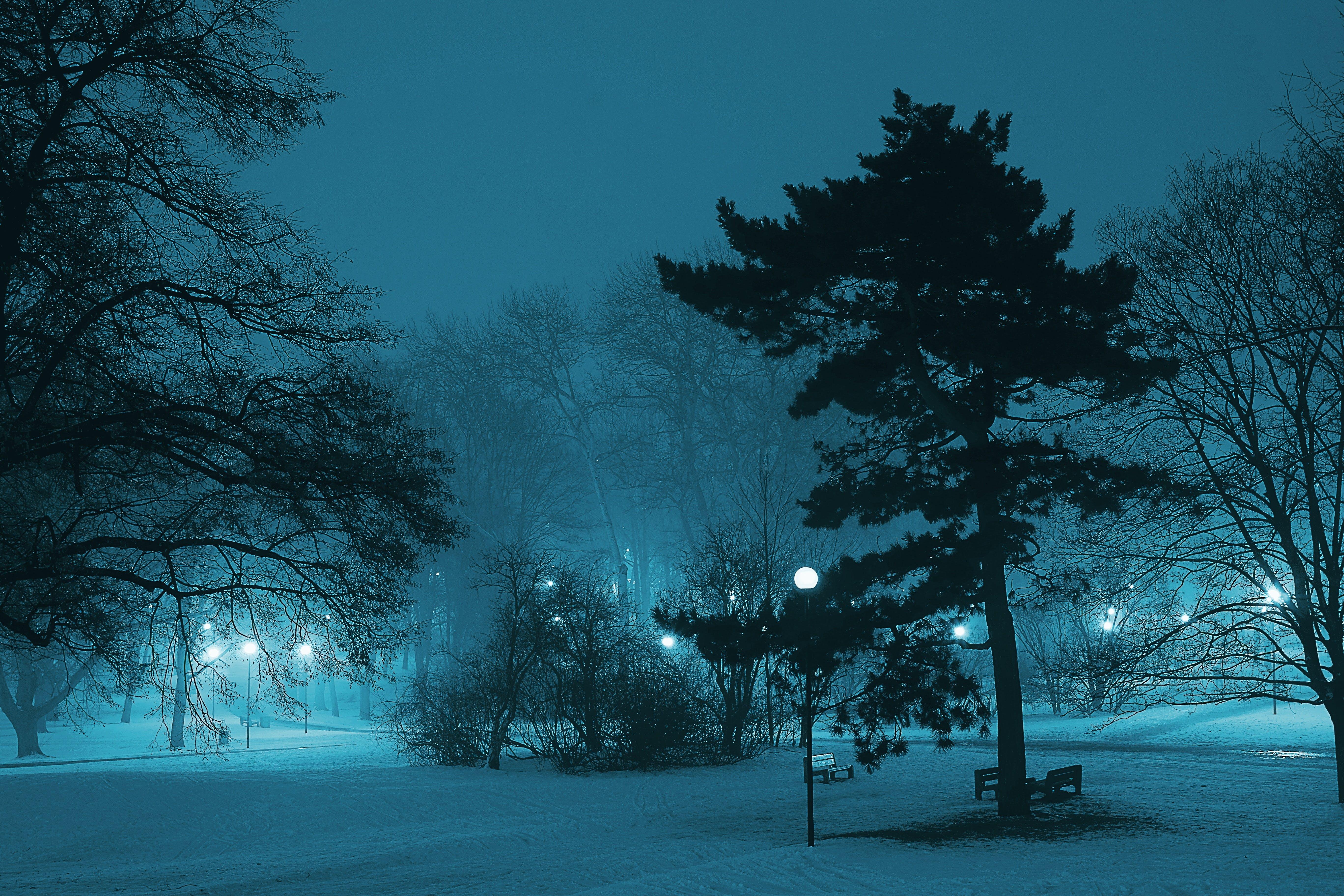 가벼운, 가지, 감기, 겨울의 무료 스톡 사진