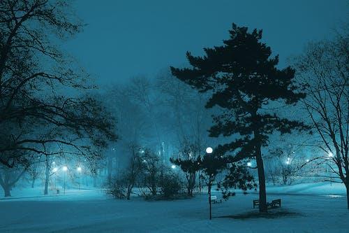 Foto stok gratis alam, bayangan hitam, beku, berkabut