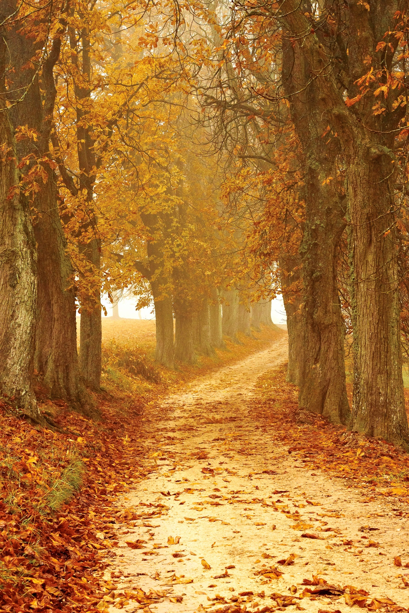 fall images free