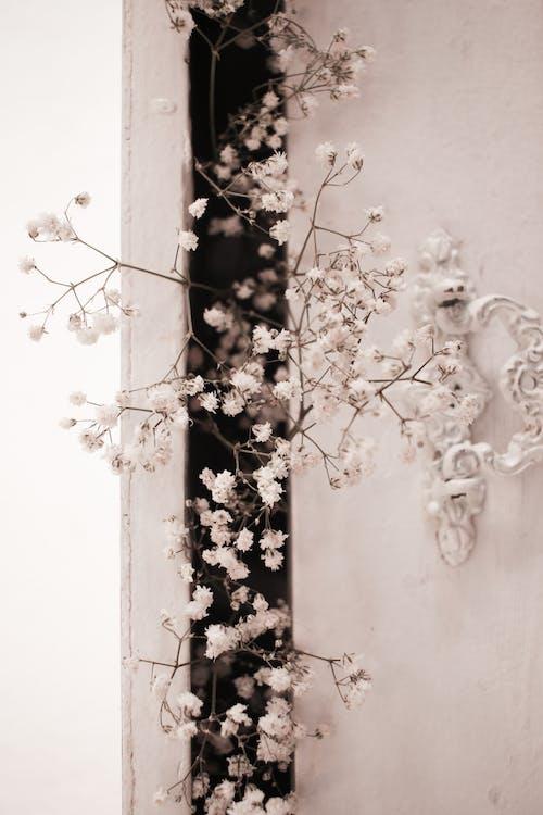 คลังภาพถ่ายฟรี ของ ก้าน, การเจริญเติบโต, ดอกไม้, ผนัง
