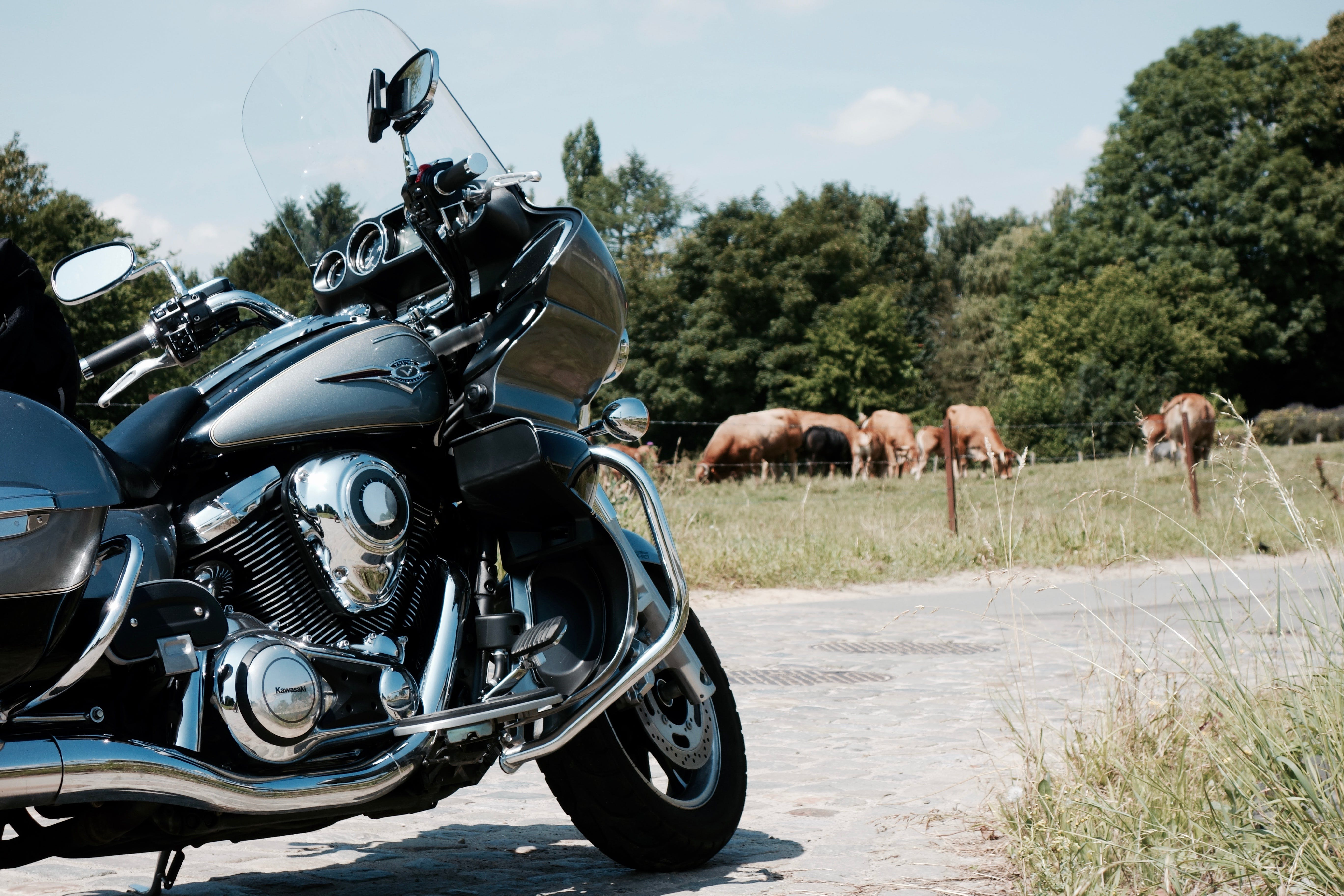 Free stock photo of landscape, vulcan, cows, motorcycle