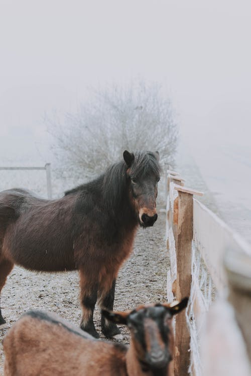 Brown Horse on White Wooden Fence
