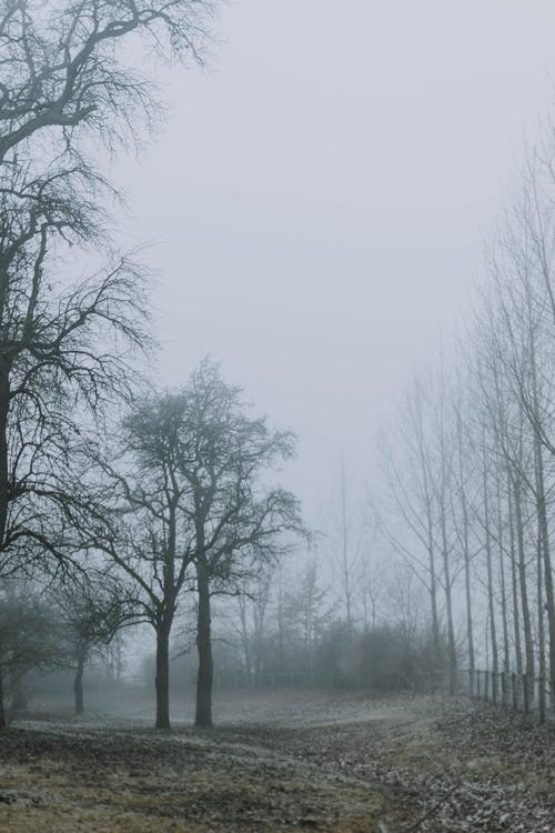 Leafless Trees on Foggy Day