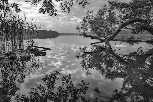 Ingyenes stockfotó fák, fekete-fehér, fény, festői témában