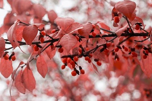 Photos gratuites de beauté dans la nature, feuilles d'automne, fond d'écran, galerie de photos