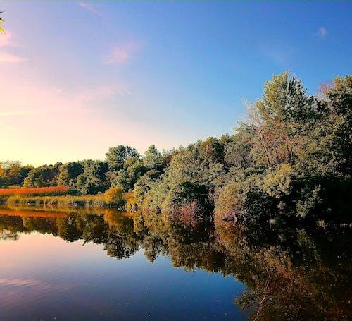 Photos gratuites de arbres, beauté dans la nature, image d'arrière-plan, nature