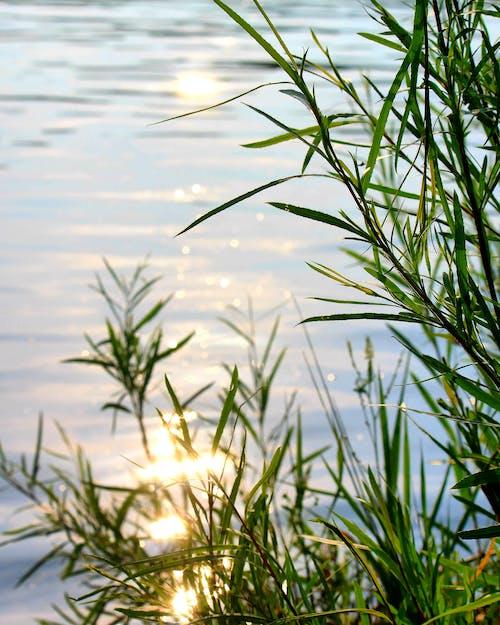 Photos gratuites de abstrait, beauté de la nature, fond de nature, photo macro