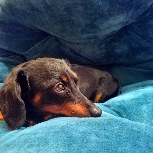 Photos gratuites de amoureux des animaux, animal, animaux de compagnie, animaux domestiques