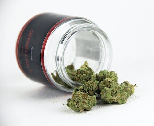 Free stock photo of cannabis, Legalization, marijuana