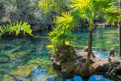 Безкоштовне стокове фото на тему «безтурботний, вода, вродлива, Денне світло»