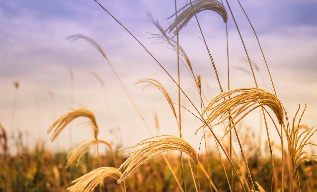 ambiente, azienda agricola, campo