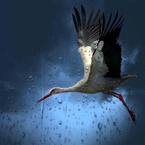 White and Black Bird Flying Under Dark Rainy Sky
