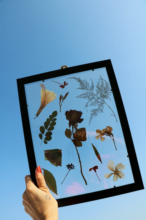 Dried Flowers And Leaves In A Frame