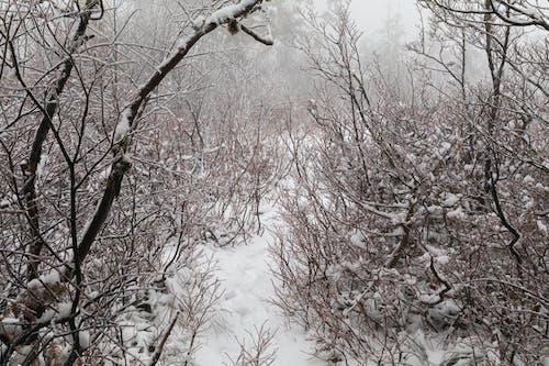 Gratis arkivbilde med snø, snøfall, snøhvit skog