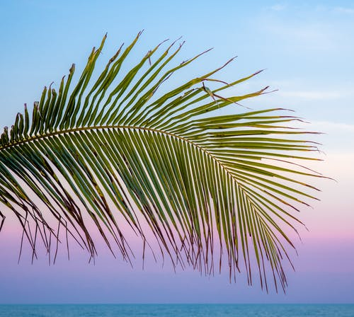 Free stock photo of minimalist, palm leaves, sunset
