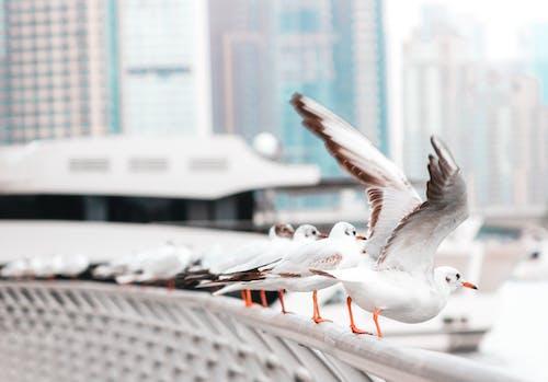 Ảnh lưu trữ miễn phí về bộ lông, chim, chim đậu, chim trắng