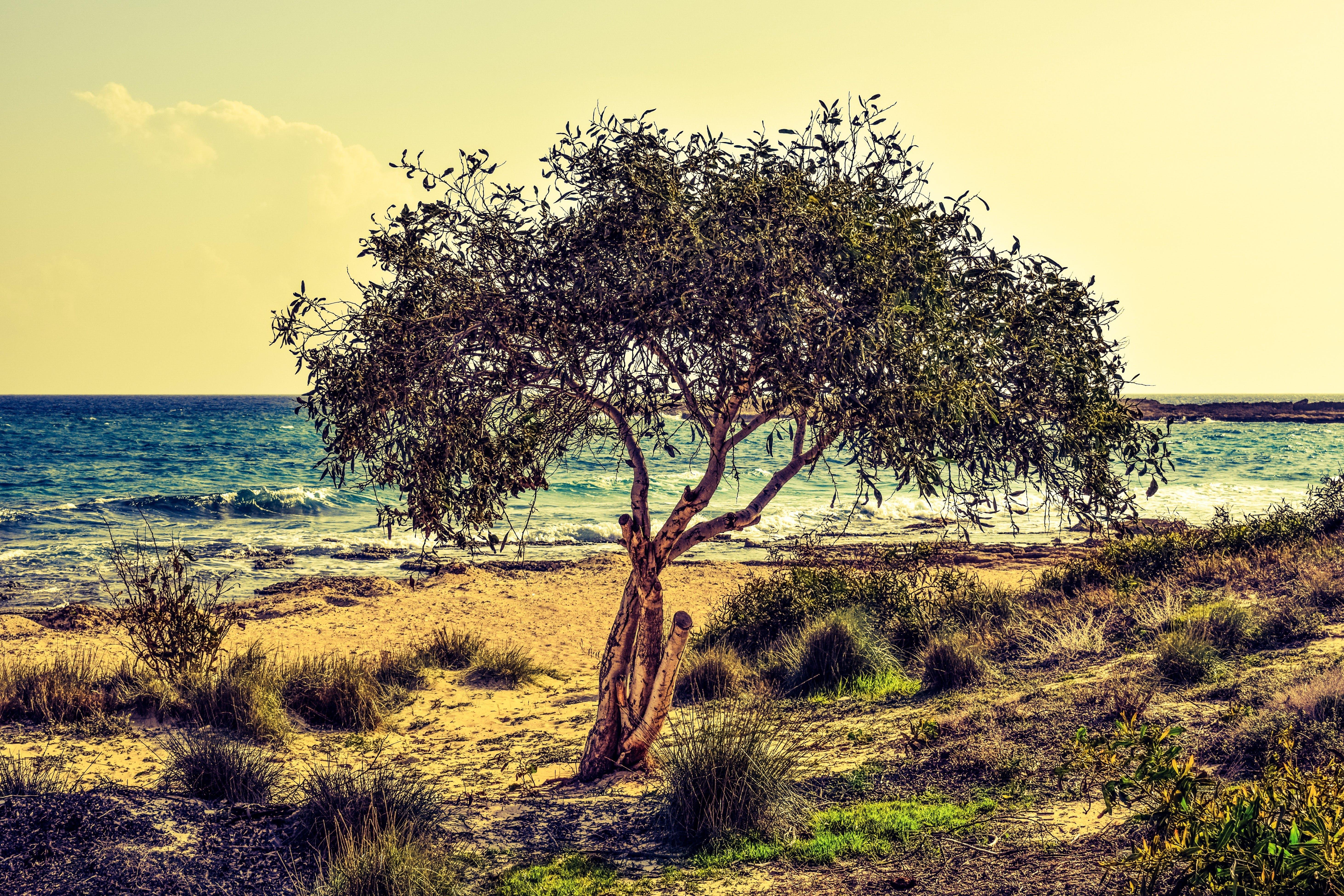 beach, beautiful, grass