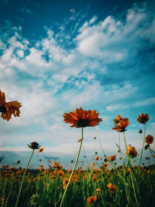 Ảnh lưu trữ miễn phí về ánh sáng ban ngày, bầu trời, cảm hứng, cánh đồng