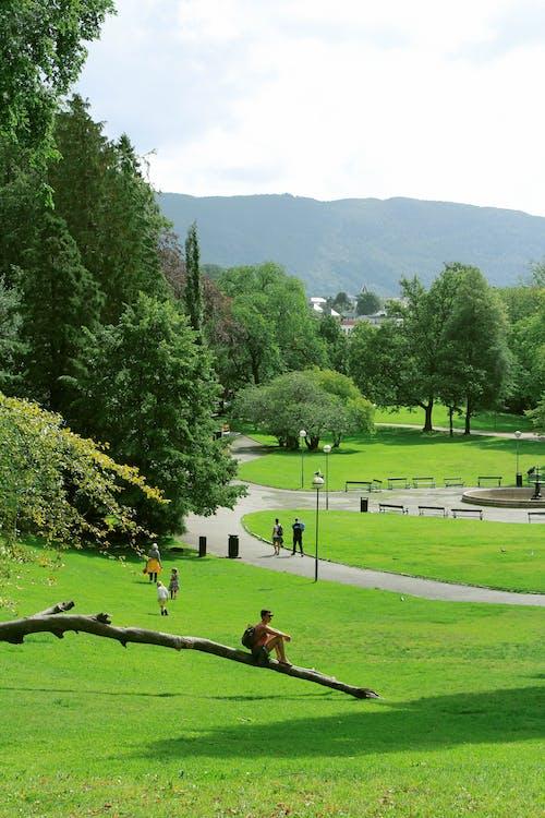 Free stock photo of beautiful landscape, bergen, chill, green