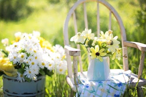 Flowers in Vase on Chair