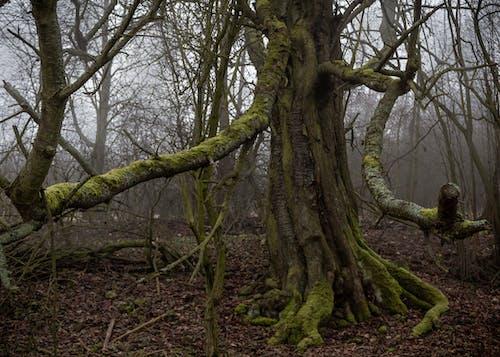 คลังภาพถ่ายฟรี ของ ตอนเช้า, ป่า, ฤดูหนาว, หมอก
