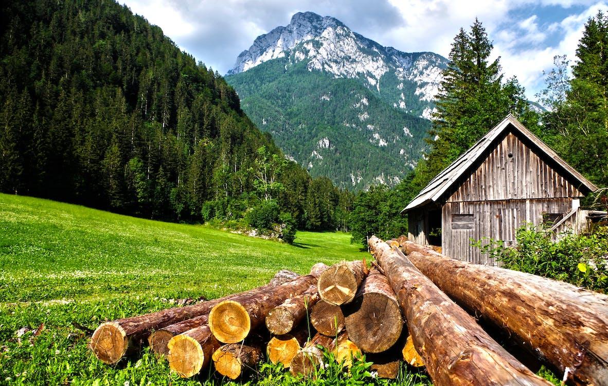 alberi, alpi, ambiente