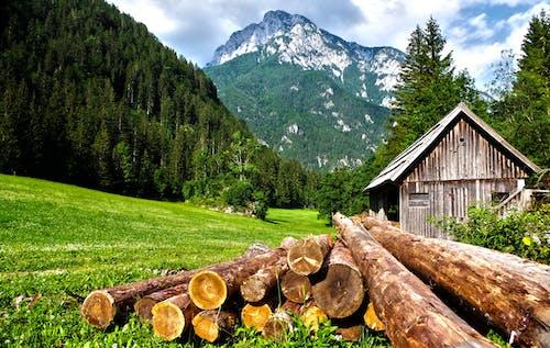 Brown Logs on Grass Field
