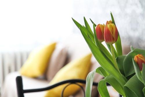 bitki, bulanıklık, büyüme, Çiçek açmak içeren Ücretsiz stok fotoğraf