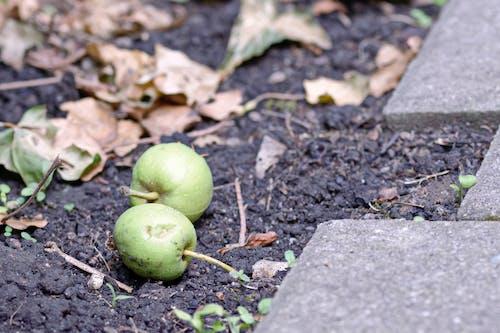 Immagine gratuita di autunno, finitrici, foglie, foglie cadute