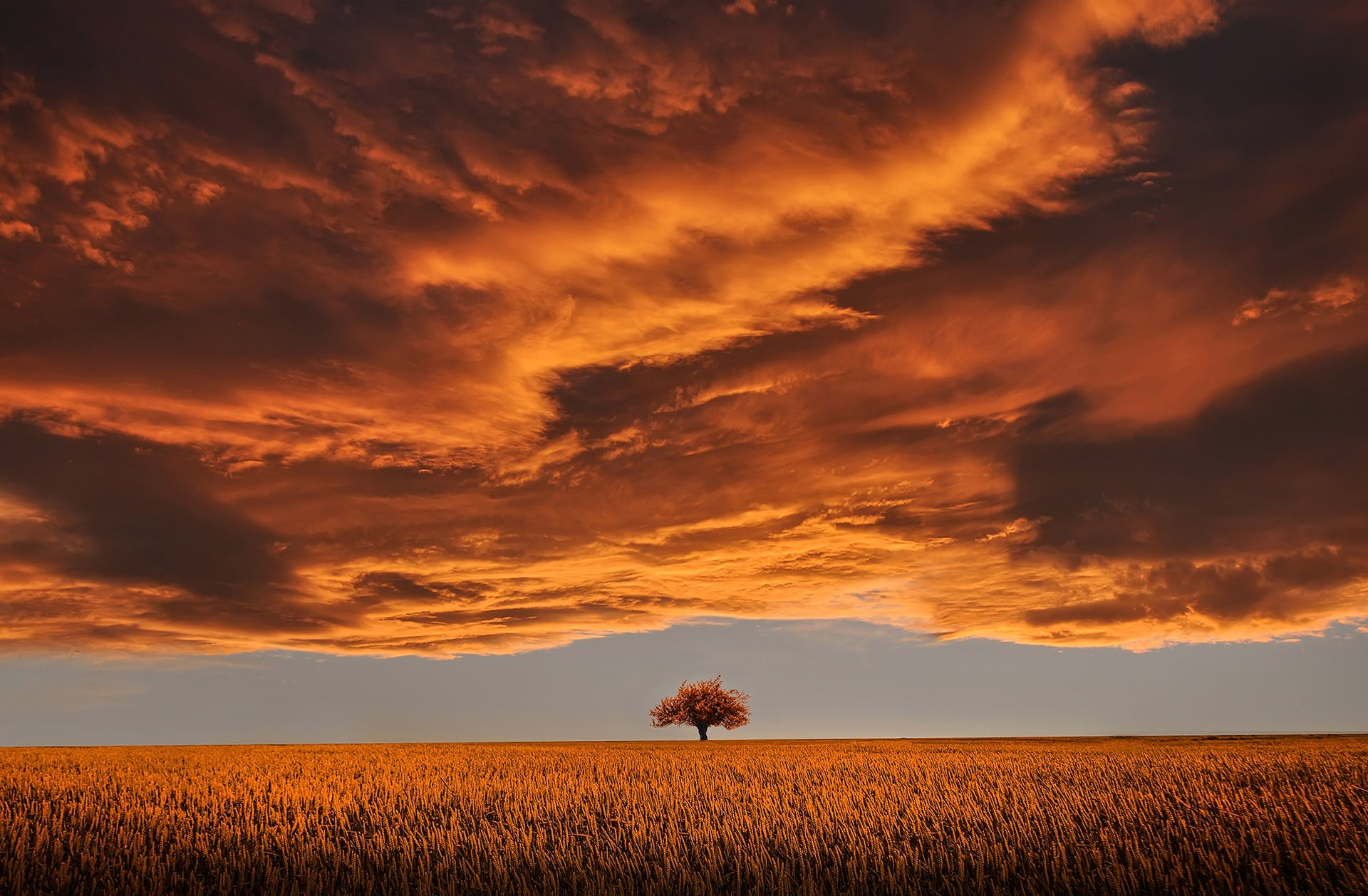 Brown Leafed Tree on Open Field Under White Clouds and Blue Sky