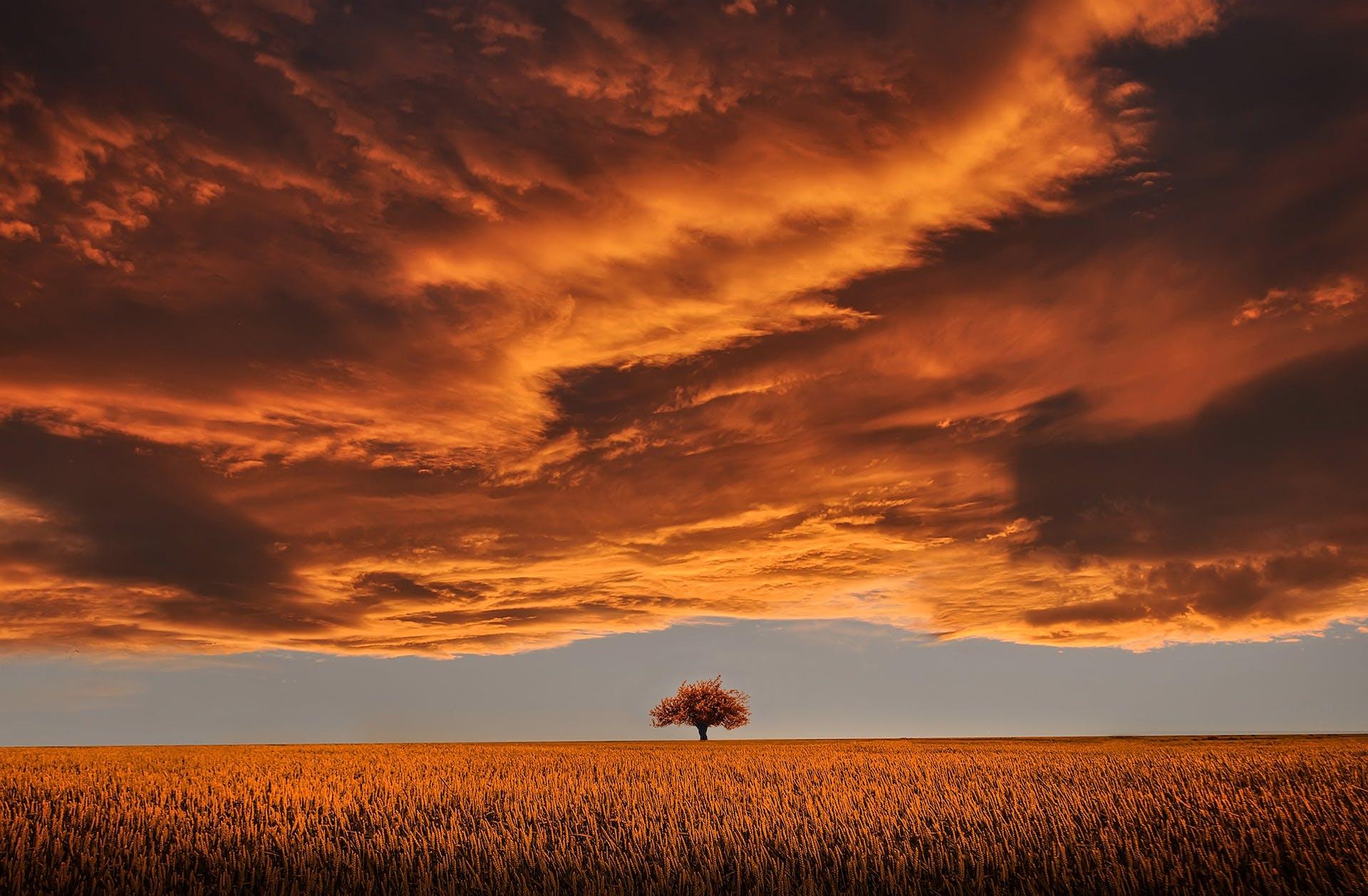 beautiful, clouds, evening