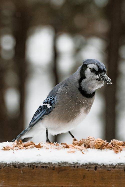 動物, 動物攝影, 宏觀, 微距攝影 的 免費圖庫相片
