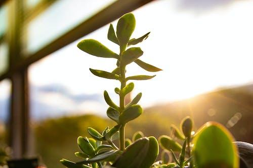 Free stock photo of bright, desk, green, succulent
