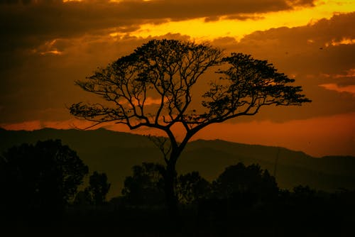 Free stock photo of Atardecer, Large Tree
