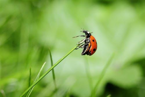 Orange Ladybug on Green Plant
